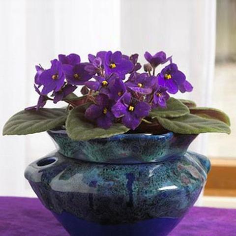 Красиво-цветущие растения