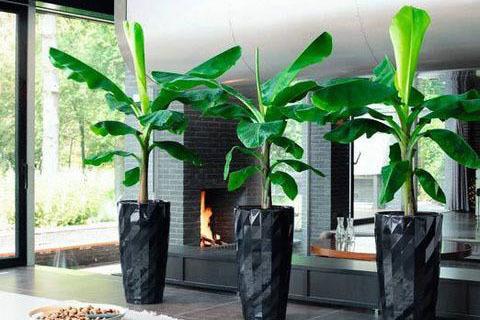 Растения-крупномеры