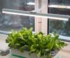 Домашние грядки и проращиватели семян