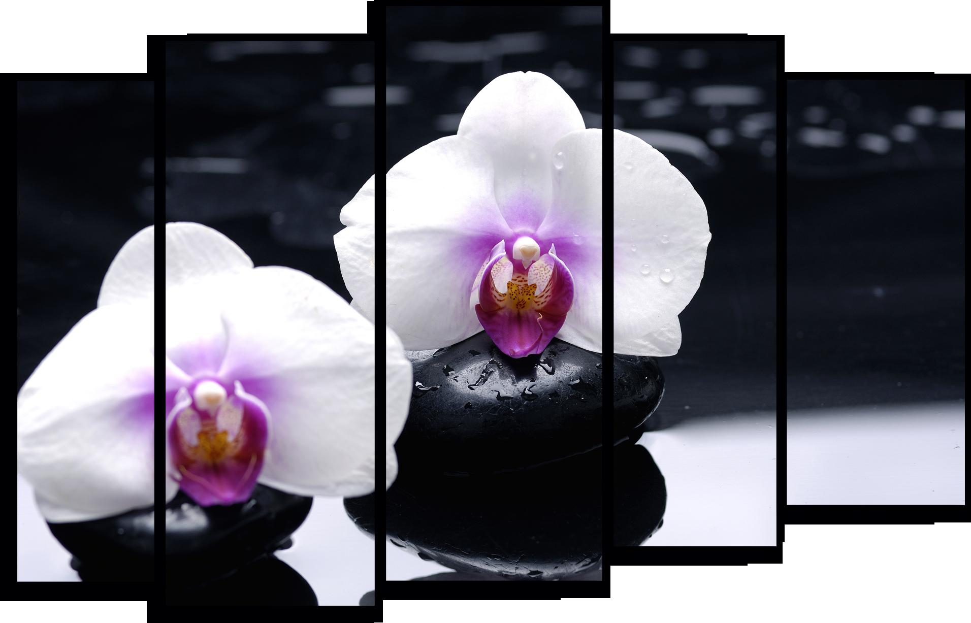 """Цветы Модульная картина """"Белые орхидеи"""" М765.png"""
