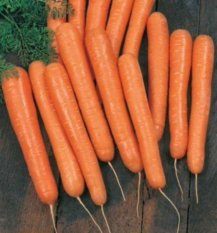 Нантский Волкано F1 семена моркови нантской (Vilmorin / Вильморин) Волкано_F1_семена_овощей_оптом.jpg