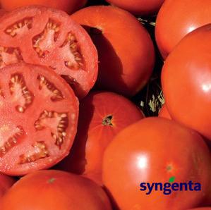 Каталог Сагатан F1 семена томата детерминантного (Syngenta / Сингента) сагатан.png