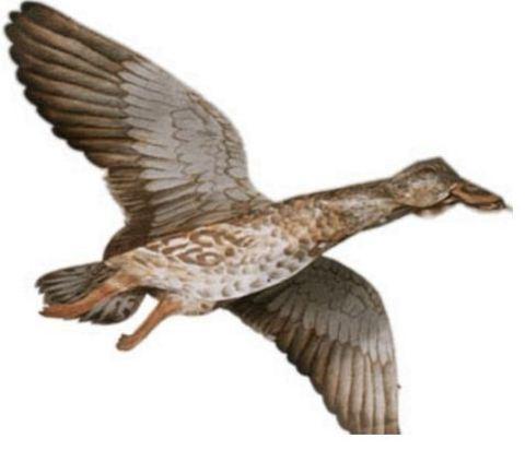 Приманка объёмный парящий воздушный змей