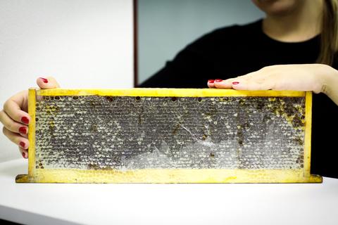 Натуральный мед в сотах HoneyForYou, 1700 г