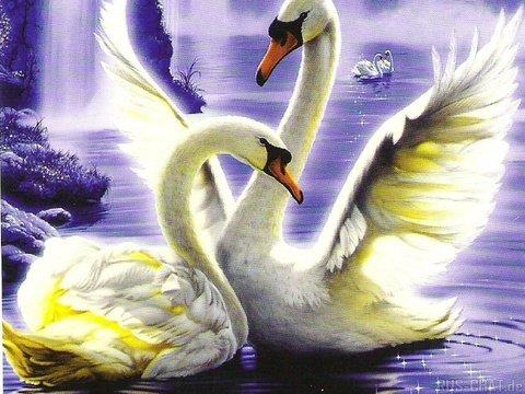 Картина раскраска по номерам 30x40 Пара лебедей вблизи