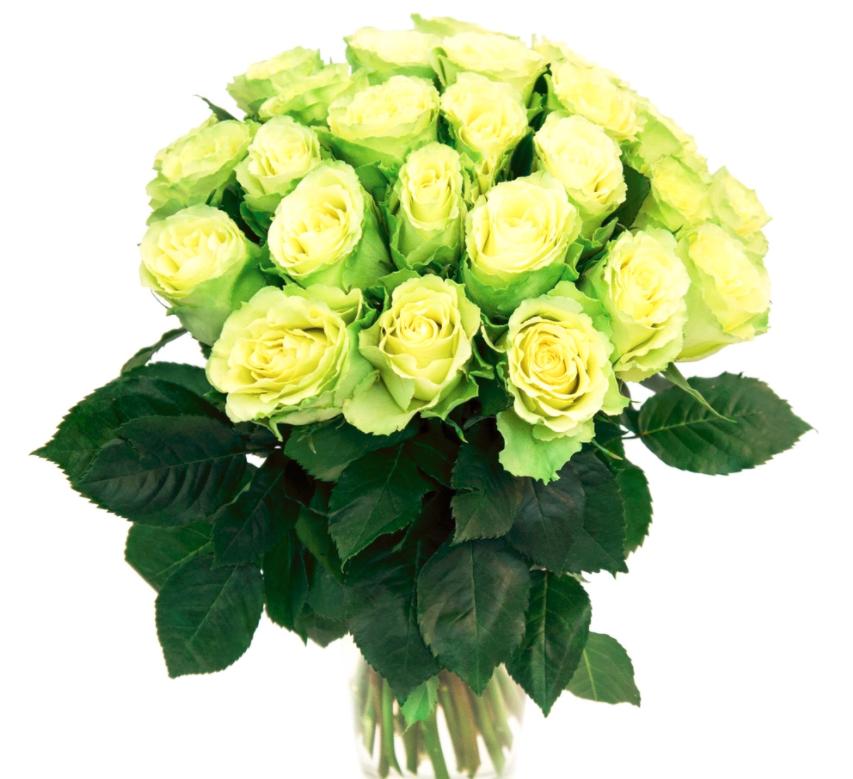 кто его открытки поздравления зеленые розы предлагаем
