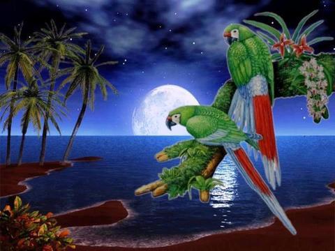 Картина раскраска по номерам 30x40 Попугаи на острове