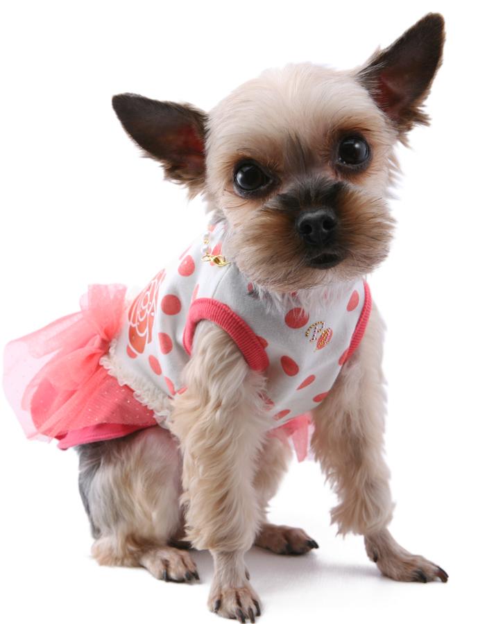 106 PA - Платье для собак