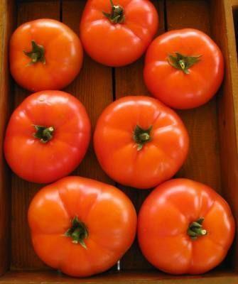 Томат Мартэз F1 семена томата полудетерминантного (Seminis / Семинис) Мартэз_F1__Martez_F1___2__семена_овощей_оптом.jpg