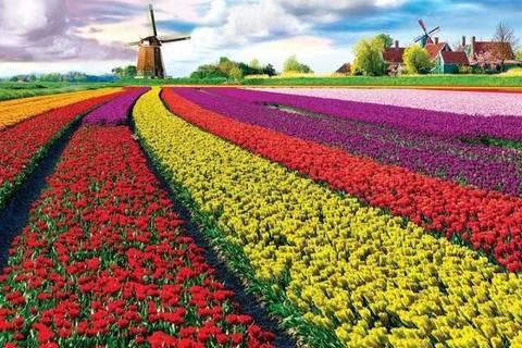 Алмазная Мозаика 40x50 Поле разноцветных маков