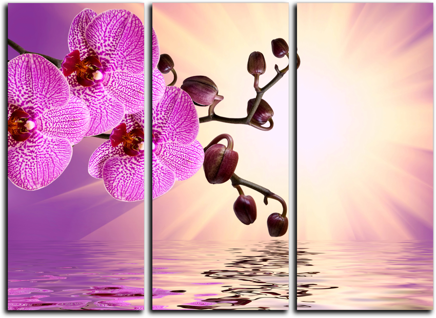 """Модульные картины Модульная картина """"Розовый лепесток"""" М19.png"""
