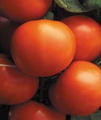 Томат Экватор F1 семена томата детерминантного (Seminis / Семинис) Экватор_F1__Equator__семена_овощей_оптом.jpg