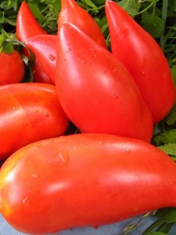 Семена Томат Корейский длинноплодный, 5 сем