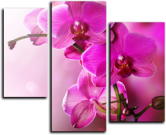 """Модульная картина """"Цветение орхидеи"""""""