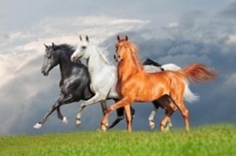 Картина раскраска по номерам 30x40 Разноцветные лошади (арт. KTL1040)