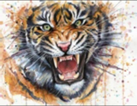 Картина раскраска по номерам 30x40 Разозлившийся тигр