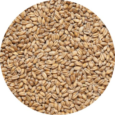 Солод пшеничный 2кг.