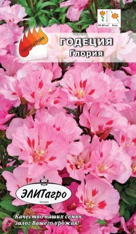 Семена Годеция Глория, Одн