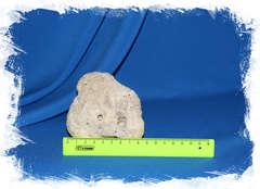 Мозговидный коралл 8,5 см.