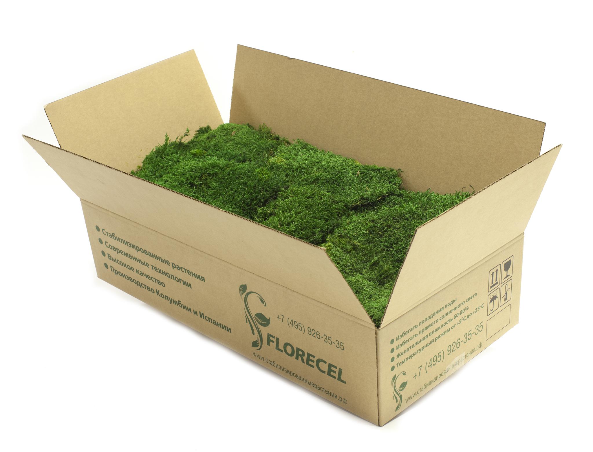 Стабилизированный мох пластами в коробках по 2,5 кг.