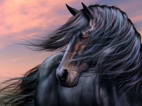 Картина раскраска по номерам 30x40 Черная лошадь