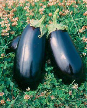 Баклажан Анет F1 семена баклажана (Nunhems / Нюнемс) АНЕТ_F1_семена_овощей_оптом.jpg