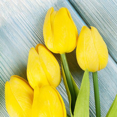 Тюльпаны желтые от 9шт