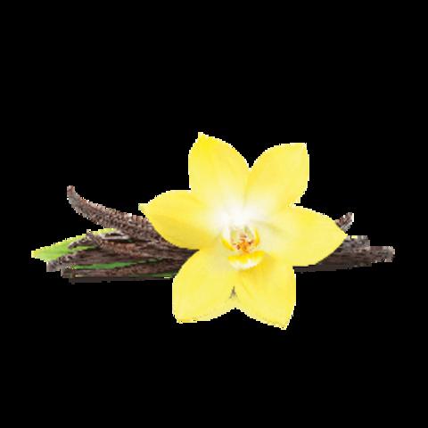 Fumari French Vanilla