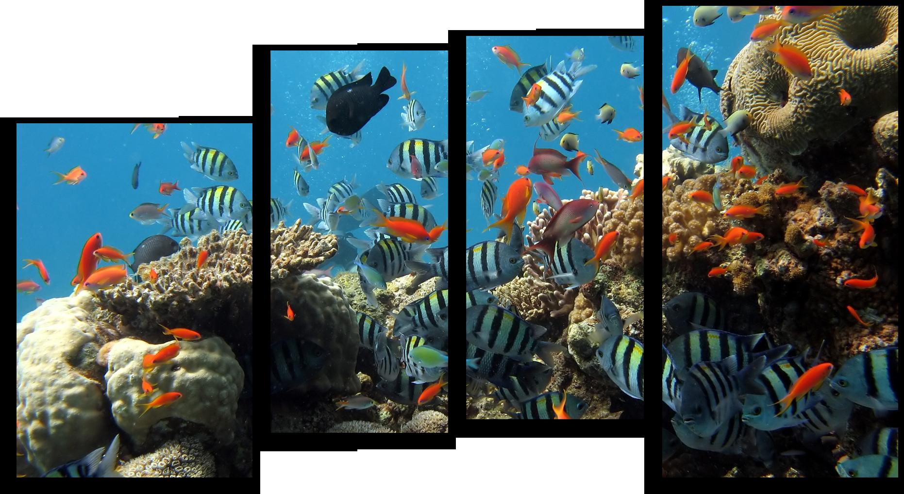 """Животные Модульная картина """"Рыбный переполох"""" М451.png"""