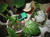 Светильник генерирующих изумрудный свет для растений на солнечной батарее