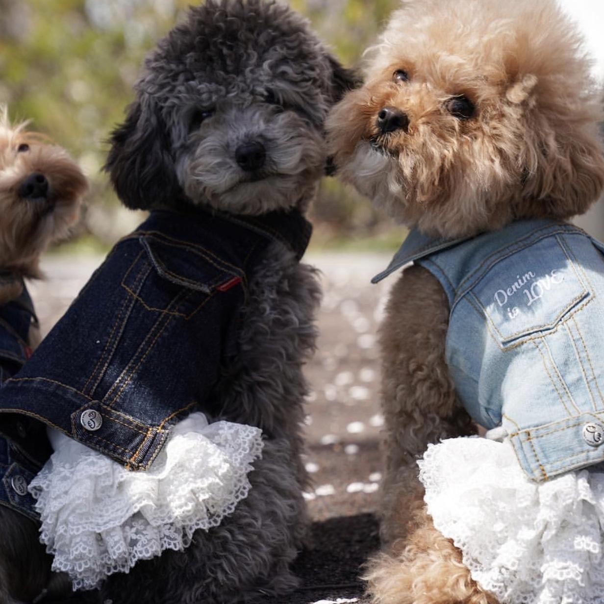платья для собак маленьких пород