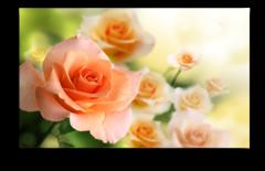 """Постер """"Персиковые розы"""""""