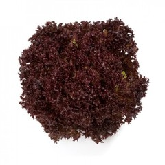 Кармези семена салата лолло росса (Rijk Zwaan / Райк Цваан)