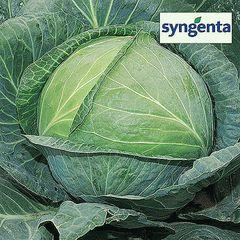 Агрессор F1 семена капусты белокочанной (Syngenta / Сингента)