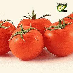 Айваз 331 F1 семена томата детерминантного (Enza Zaden / Энза Заден)