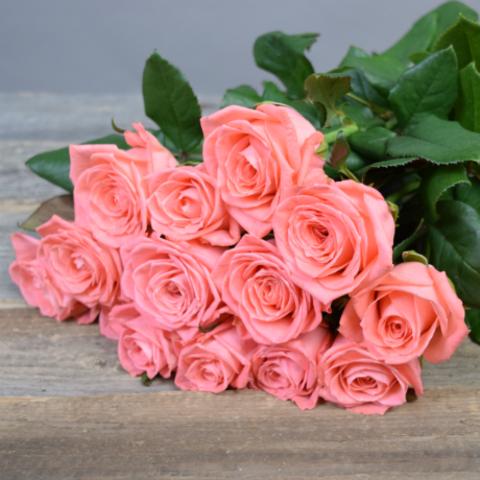 Розы коралловые Anna Karina от 9шт