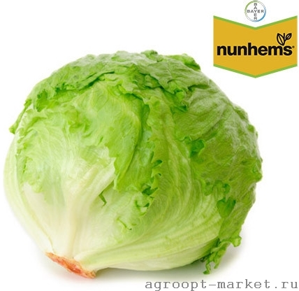 Nunhems Куала семена салата айсберг (Nunhems / Нюнемс) куала.jpg