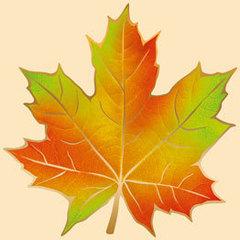 Открытка Кленовый лист, 240*240мм