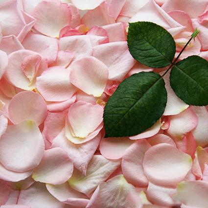 Букет 51 пионовидная роза Pink O'Hara