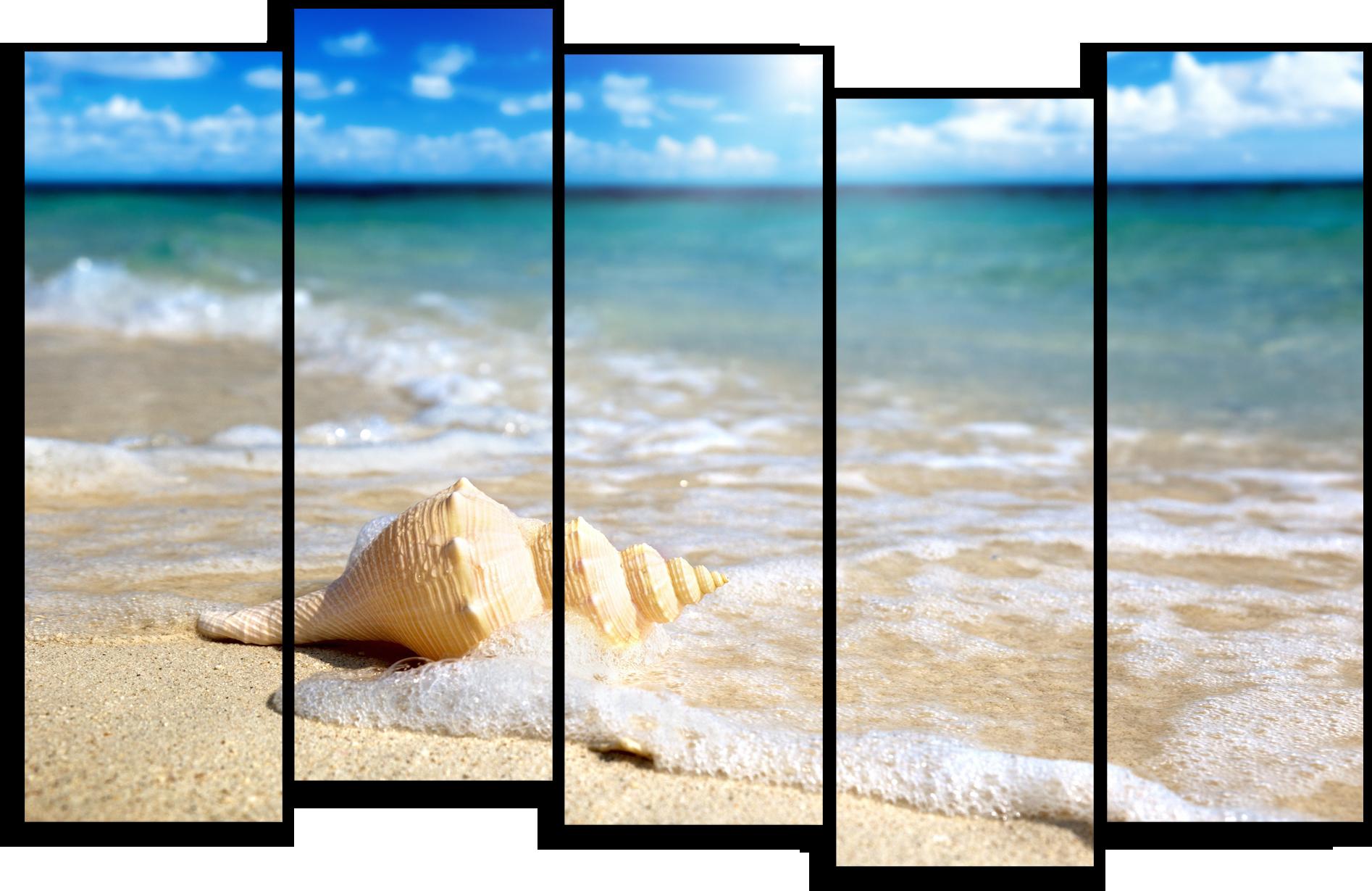 "Природа Модульная картина ""Ракушка на берегу"" М455.png"