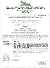 Зеленый лук БИО (Васильки), 100 гр