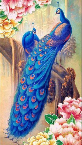 Картина раскраска по номерам 40x50 Пара павлинов