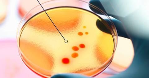 Микробиология-агары, среды питательные, бульоны, сыворотки, диагностикумы, индикаторы