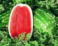 Мелания F1 семена арбуза (Seminis / Семинис)