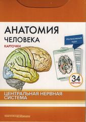 Анатомия человека: КАРТОЧКИ (34 шт). Центральная нервная система