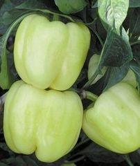 Марадонна F1 семена перца сладкого (Seminis / Семинис)