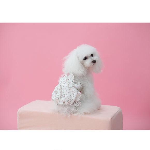 2568 BH - Летние штанишки для собак
