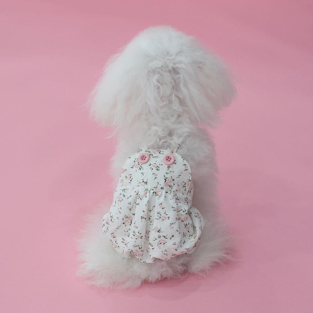 штанишки для собак boris house