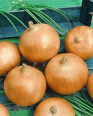 Кремень семена лука репчатого (Гавриш)