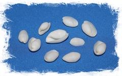 Ракушки Белый Бублес